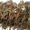 Florida crawfish lobster dive endorsement for lease $3500